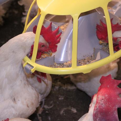 broiler-breeders-feeder-pan-boozzter