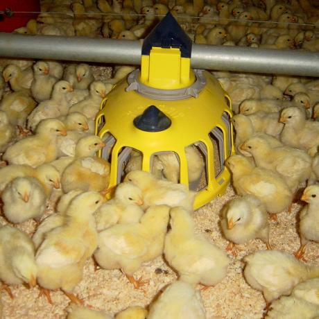 broiler-breeders-feeder-pan-kixoo