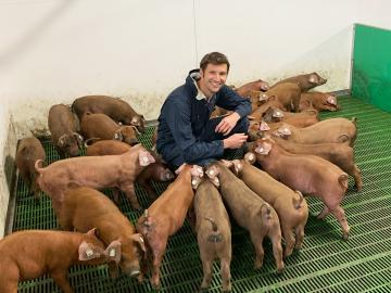 pigs-uk-charlie-thompson-1