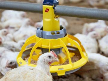 broilers feeder pan minimax roxell 10-strut roxell